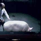 Cameron in stranger than fiction pig sex scandal – David Baldelli