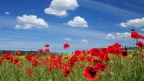 Rememberance day thoughts – Julian Eldridge